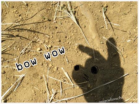 Bowwow_5