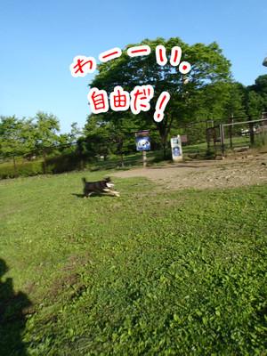 Don4_2