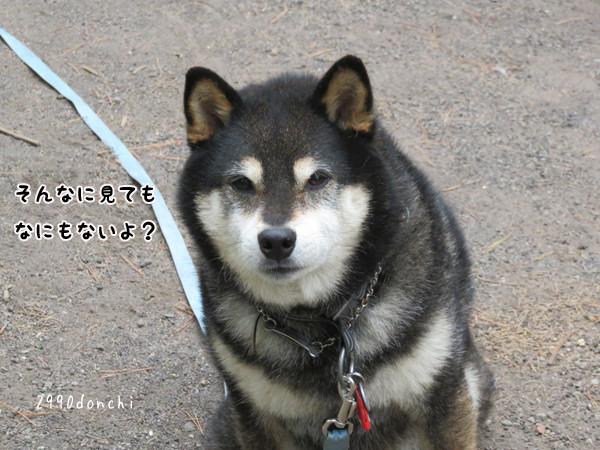 Donko6_3