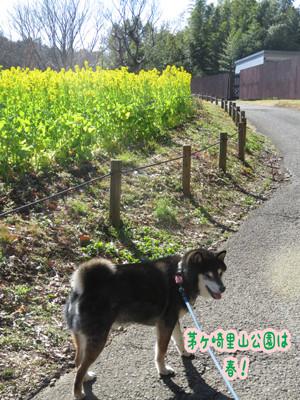Chigasakisatoyama
