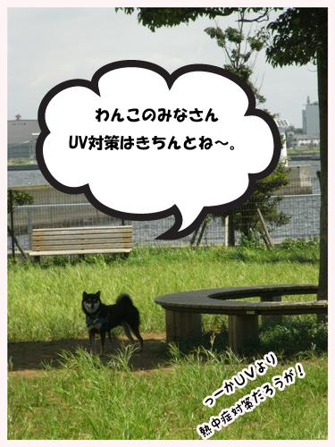 Dogrun2